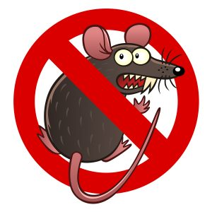Rodent damage coverage for your car in Bremerton, WA