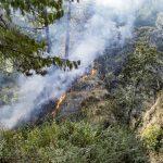 Wildfire Prevention in Bremerton, WA